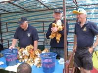 Lion ED selling off his cuddley lions