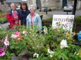 Lions Ladies at their plant stall in Honiton