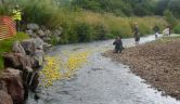 The 1500 Yellow Duck set off down the River Otter - race is on